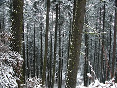 Hiking Kamiak Butte, Idaho (pmorgan) Tags: trees winter usa snow forest experiments still scenery butte quiet adams hiking idaho immersive ansel