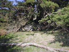 coast02022003 016 (absurd_hero) Tags: marin marinheadlands coast pacific ocean pacificocean marincounty bayarea trails mountains green nature california