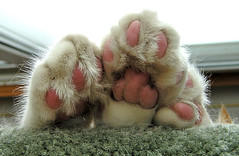 furry feet of sleeping cat