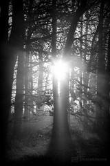 misty morning 10.12.2016 -p4d- 024 (photos4dreams) Tags: mistymorning10122016p4d winter photos4dreams p4d photos4dreamz photo rauhreif frosty rime hoarfrost landschaft landscape bw black white sw schwarz weis