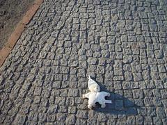 Lost Teddybear (individual8) Tags: berlin germany 2005 january tiergarten doll sidewalk ground teddybear lost promenade