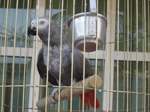 pájaro bird loro parrot