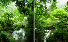 Kyoto paradise revisited (Lil [Kristen Elsby]) Tags: trees green topf25 japan garden temple pond diptych kyoto asia topv1111 traditional calm  koi pointandshoot carp verdant kansai nanzenji  eastasia kinki