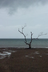 bare tree on the beach (drewish) Tags: ocean travel trees clouds thailand ilike raileybeach