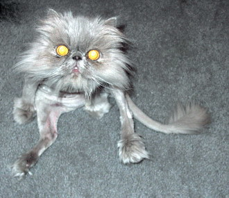 Прикольные Фотографии, картинки: Страшная кошка