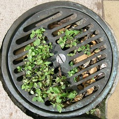squaredcircle_drain (nospuds) Tags: squaredcircle drain