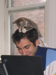 Kitten on Jason's head (finn) Tags: jason kitten proto thedailykitten