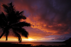 Kealakekua Bay Sunset #4 (konaboy) Tags: sunset color silhouette clouds hawaii bravo bigisland kona coconutpalm 10445