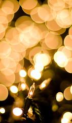 A Thousand Points of Christmas Lights (Ryan Brenizer) Tags: 2005 christmas nyc newyorkcity light stilllife holiday newyork topf25 yellow night geotagged topf50 topf75 december fuji bokeh manhattan finepixs2pro noflash columbiauniversity topf100 morningsideheights geolat40807768 50mmf14ais carpeicthusutatafeature geolon73963298