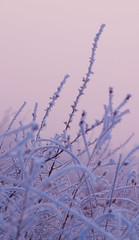 blue grass (Chris Lombardi) Tags: blue winter sunset grass fog montana frost magenta missoula inversion sentinel 3676720
