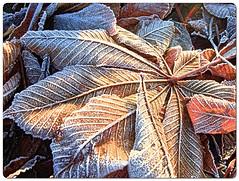 Frost (Robert Silverwood) Tags: winter frost leaves wow mrjackfrost rime wonder seasons