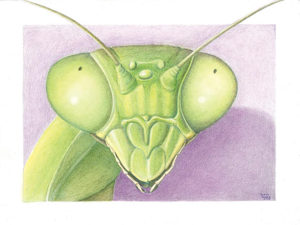 artist: <ARTIST_NAME_META> <ALT_TAGS> Mantis head