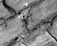 Bark (Mike Kitchen) Tags: bark closeup close up macro bw