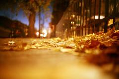 (-Antoine-) Tags: street autumn canada tree fall sol topf25 leaves automne leaf lomo lca montral quebec montreal ground qubec otoo rue arbre feuilles feuille otono antoinerouleau