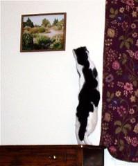 Stretch (Maia C) Tags: cats cat alexander comment cowcat maiac
