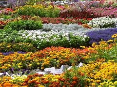 Jaulas de flores - by R.Duran