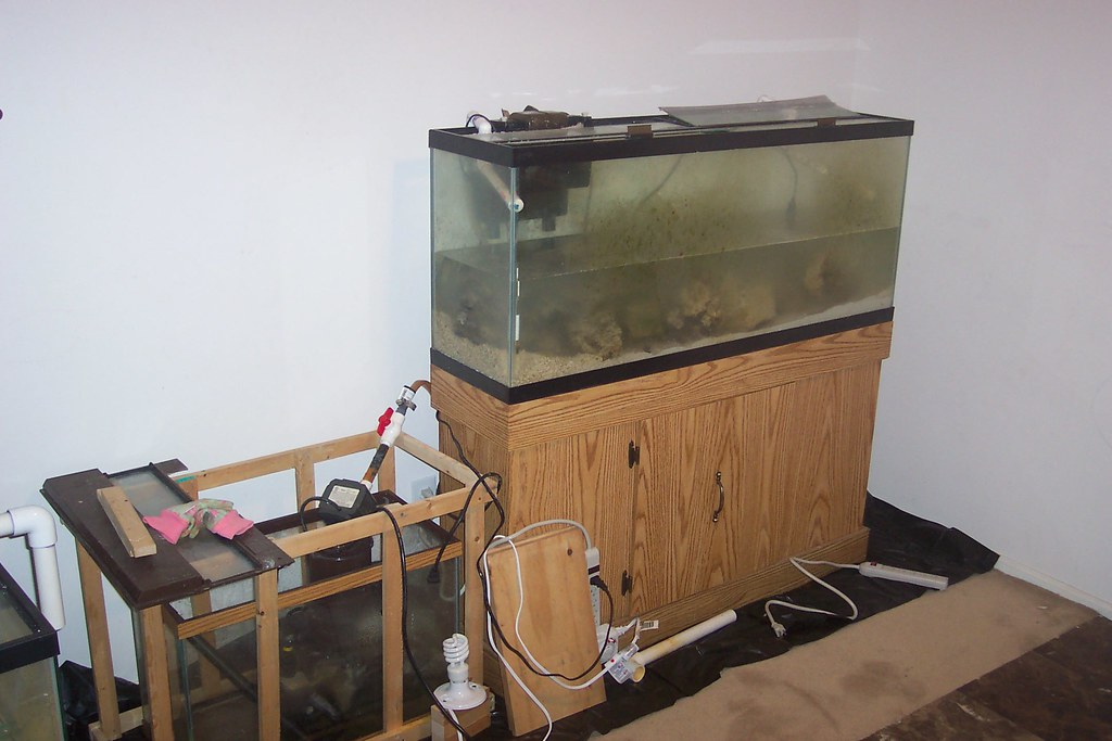 Saltwater aquarium setup