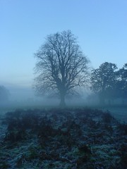MisTree (stevec77) Tags: park uk trees winter sky mist tree london topv111 misty perfect frost k750i richmond richmondpark 222v2f