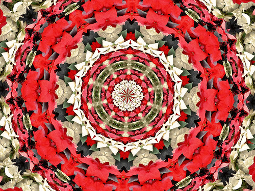 "Poinsettia Rosette - - The Many ""Faces"" of Poinsettias by Mc Shutter."
