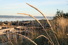Coupeville, Wa (Living Juicy) Tags: wood reed water countryside washington weed driftwood coupeville livingjuicy saywa lj2005