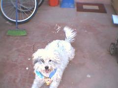descansando (Roco Mantis) Tags: dog bicicleta perro corbata escoba firu limpiapies