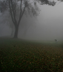 (Tristan C) Tags: winter outdoors trees fog ambiant mist nature leaves california centralvalley stockton december d20