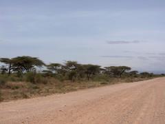 HPIM0833 (http://jvverde.birdsby.me/v2/) Tags: africa travel kenya frias safari viajes viagem lixo viagens vacations hollidays qunia lixo2