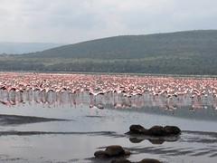 HPIM1206 (http://jvverde.birdsby.me/v2/) Tags: africa travel kenya frias safari viajes viagem lixo viagens vacations hollidays qunia lixo2