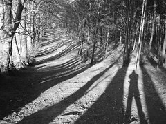 Me and my shadow (ambo333) Tags: wood uk trees shadow england selfportrait tree sunshine shadows cumbria meandmyshadow brampton ridgewood theridge selfportraitr nwenquirer bramptonridge bramptonridgewood