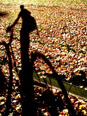 fall_leaves_shadow