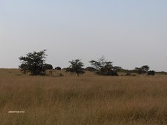HPIM1589 (http://jvverde.birdsby.me/v2/) Tags: kenya qunia safari safaris viagem viagens travel vacations hollidays viajes