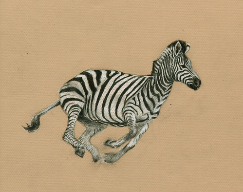 Zebra © 2006 - Color pencils on paper, 28 x 20 cm (Private assignment) [DE]