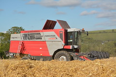 Massey Ferguson 7274 Cerea Combine Harvester cutting Winter Barley (Shane Casey CK25) Tags: massey ferguson 7274 cerea combine harvester cutting winter barley mf red agco whitegate cloyne grain harvest grain2016 grain16 harvest2016 harvest16 corn2016 corn crop tillage crops cereal cereals golden straw dust chaff county cork ireland irish farm farmer farming agri agriculture contractor field ground soil earth work working horse power horsepower hp pull pulling cut knife blade blades machine machinery collect collecting mähdrescher cosechadora moissonneusebatteuse kombajny zbożowe kombajn maaidorser mietitrebbia nikon d7100