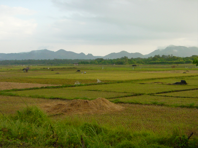 453301545_685cda1cd7_o - Rice Fields in Guindulman, Bohol beautiful image - Guindulman - Bohol