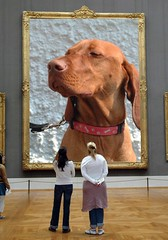 Woody In the hall of fame...... (Woody Worth) Tags: family dog cute dogs animal puppy happy puppies woody vizsla 100views 300views 200views elaine worth doggy kev hungarian viszla whitwick dumprnet