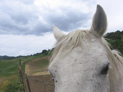 Horse, Calero County Park