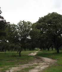 Camino (majadahonda) Tags: madrid espaa spain arboles caminos campo boadilladelmonte
