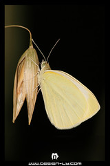 Butterfly ( ) Tags: world africa heritage sahara 350d italian sand desert dunes muslim north palm arabic libya tripoli digitalrebelxt colony touareg libyan ghadames benghazi libia libye   libyen ubari  lbia kissndigital  jamahiriya libi  libiya liviya libija      lbija  lby  libja lbya liiba livi