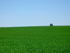 Where Green meets Blue (NguyenDai) Tags: nature countryside belgium belgique belgi campagne lige wallonie greenblue nguyendai bestofr fallais braives