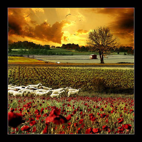 Landscape by Eon Nicolas