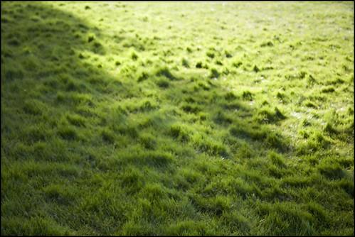 cloud edge on grass