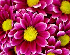 Mike smile... (birthmarkleg) Tags: pink flowers macro love boyfriend nature beautiful yellow friend colours forever feelings top20flowers flowerscolors amazingtalent instantfave imcrazyaboutyou abigfave scoremefast colorphotoaward aplusphoto superhearts searchandreward
