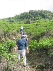 jalur  tea walk