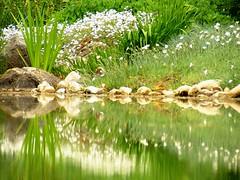 Zagreb Botanical Garden (robokow) Tags: flowers reflection nature water spring flora colorfull zagreb urbannature springtime reflectioninwater s5600 fujifinepixs5600 spring2007 robokow superhearts flickrelite explorerobokow