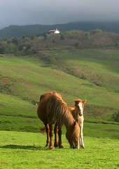 Caballos/Horses (zubillaga61) Tags: horses caballos potro yegua zaldiak