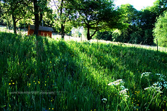 the meadow iii. (*Sabine*) Tags: green germany landscape deutschland scenery europa europe meadow wiese landschaft bergischesland solingen weinsbergtal year:uploaded=2007 sabinesteinmller