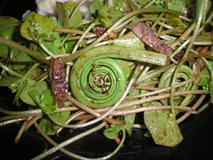 Fiddlehead and Morel Salad
