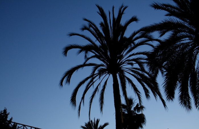 Palms in the Raval