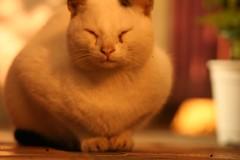 IMG_4553 (seannyK) Tags: cat kitty center breeze