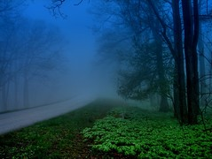 Blue Mist and May Apples